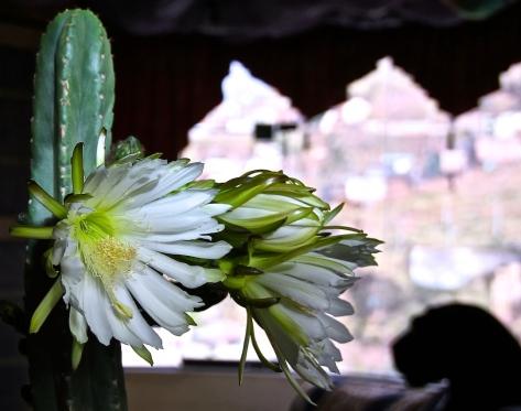 WACHUMA FLOWER  copy 2